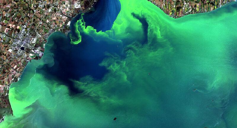 Cyanobactéries et cyanotoxines