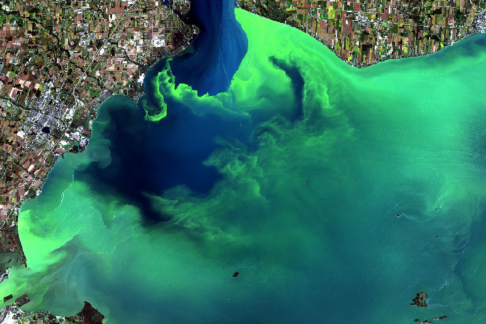 Cyanobacteria & Cyanotoxins